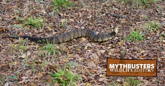 DNR MythBusters: Wildlife Edition: Do snakes chase people?