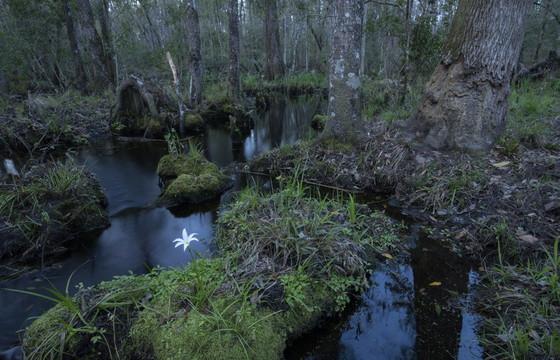 Freshwater wetland at Ceylon (Mac Stone)