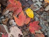 Leaf Watching