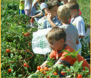 Image of a school garden