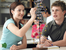 High school students working with a model of DNA.