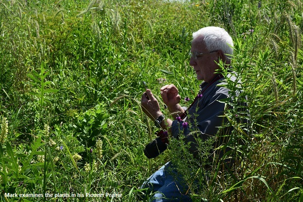 Mark Wetmore examines a plant in his prairie