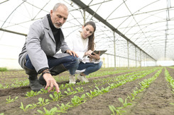 Adult with agriculture student checking plants
