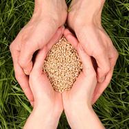SeedShare