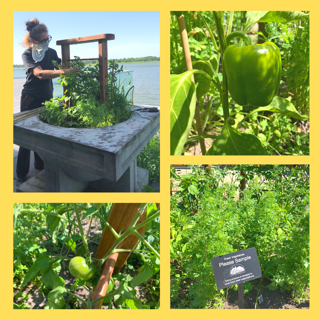 Salsa Planters
