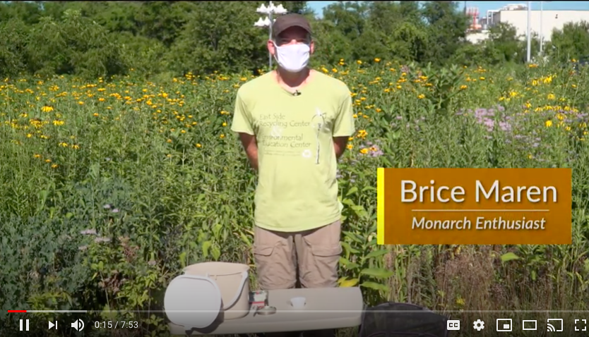 Image of YouTube video on raising monarch butterflies is shown.