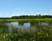 forest preserves