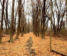 Oriole Grove Forest Preserve