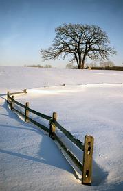 lcfpd winter beauty
