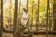Hawk turns 30