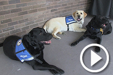 State's Attorney's Office service dogs