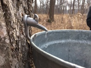 2019 maple syrup hikes
