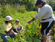 Green Youth Farm