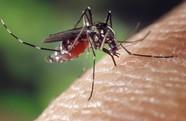 West Niles Virus