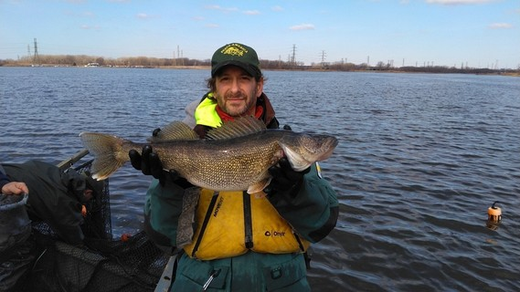 Fisheries biologist holding up a walleye