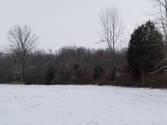 Forested strip at edge of snowy field