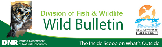 Wild Bulletin