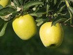 Beasley Orchard