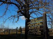 deam oak
