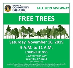 DCF Tree Giveaway