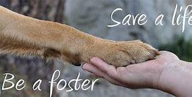 Foster an Animal