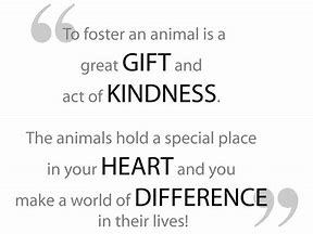 Foster an Animal Quote