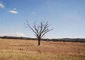 Tree - Dead