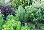 herb garden photo