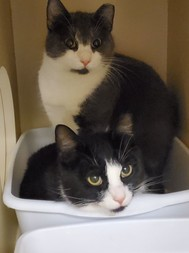 Dexter and Dalanie the cat siblings