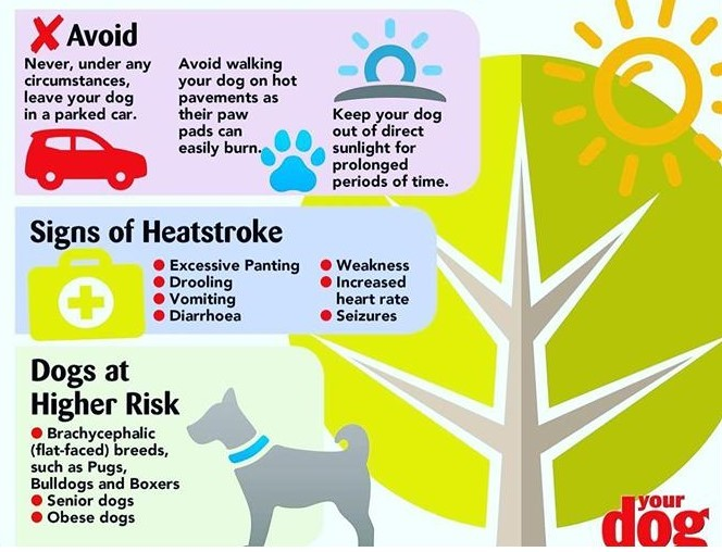 Pets Hot Weather 2