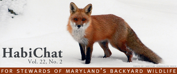 Photo of fox in snow with HabiChat title