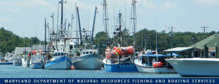 Photo of: Commercial boats in harbor