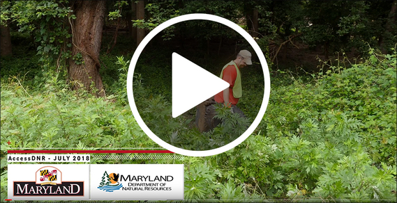 Still frame from video showing park cleanup