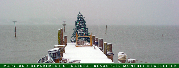 Banner featuring Christmas tree on pier
