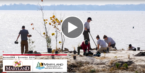 Still frame of video intro showing people planting on the shore
