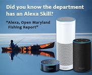 Image of Alexa smart speakers