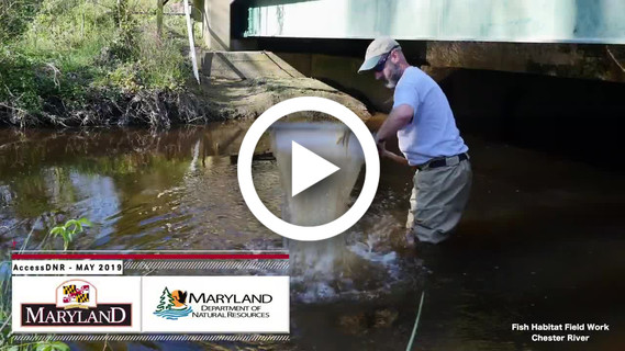 Image from AccessDNR video of man with net in stream