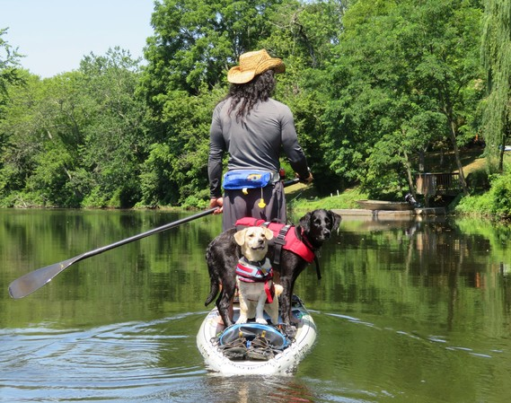 Photo of man paddleboarding with dogs