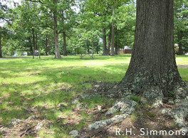 Photo of lawn of native grasses