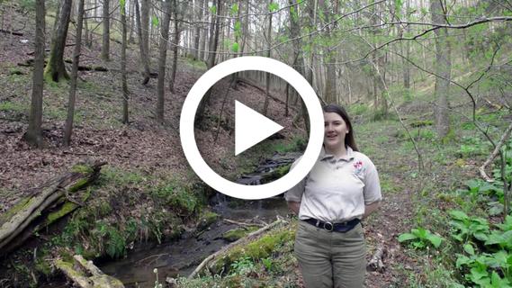 Video still from video about Gunpowder State Park