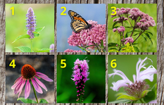 Image of plants that provide habitat to bees