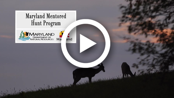 Image from video of deer feeding at dawn
