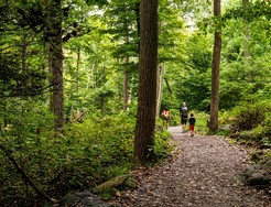 Photo of hikers on a forested trail