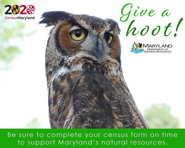 DNR Give a Hoot about Census