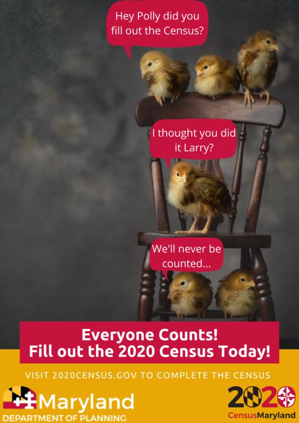 Census Chicks