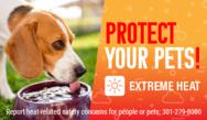 protectpetsinheat