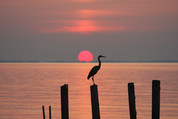 picture of Chesapeake bay