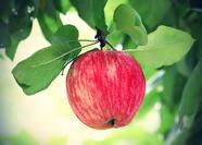 Stock image of fruit