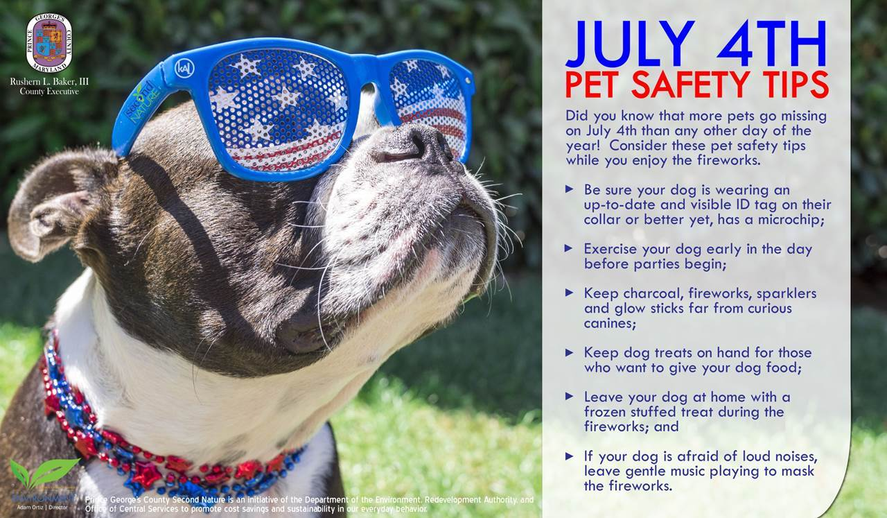 DoE's Tuesday Tip: Fourth of July Pet Safety Tips