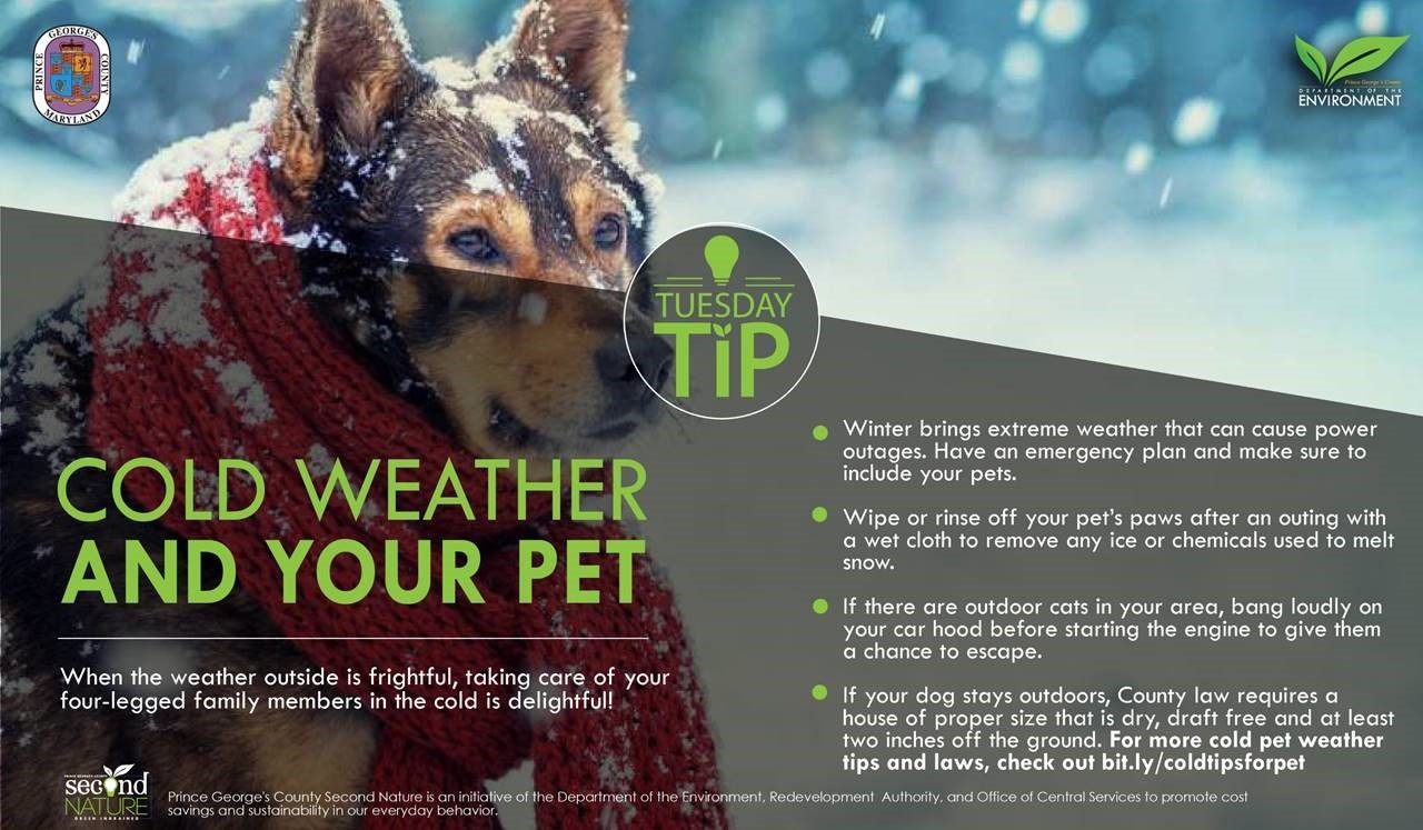 Tues Tip 12.4.18 Pet Cold weather